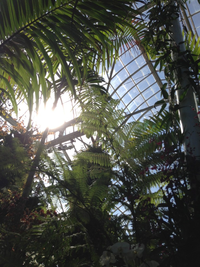 The Enid A. Haupt Conservatory, transformed into a lush tropical forest